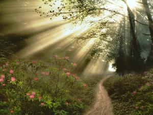 La sed infinita del corazón humano sólo con Dios se sacia